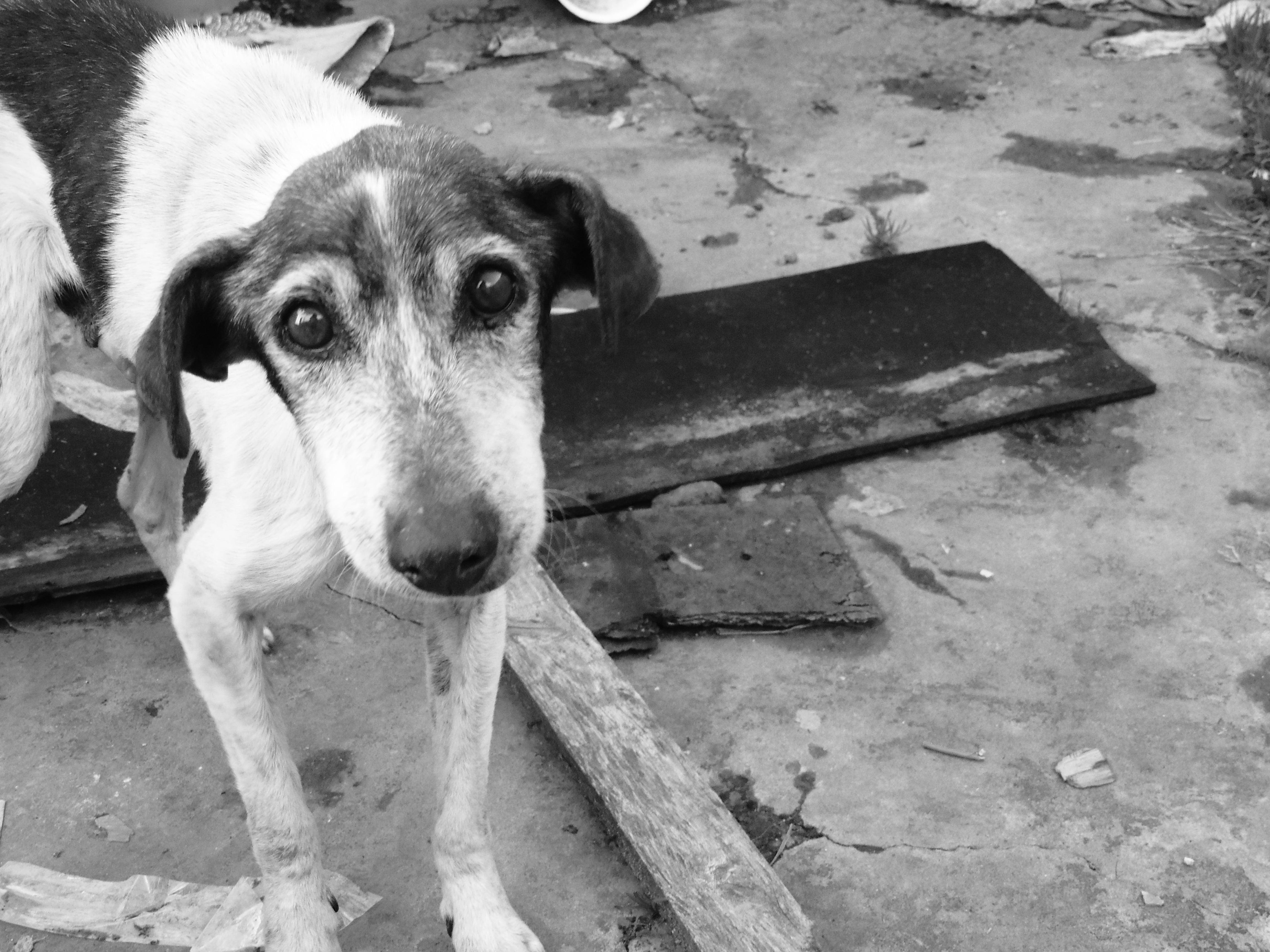 L'ENPA smentisce le numerose fake sull'abbandono dei cani ai tempi del coronavirus e lancia la campagna: #restoincasaconte
