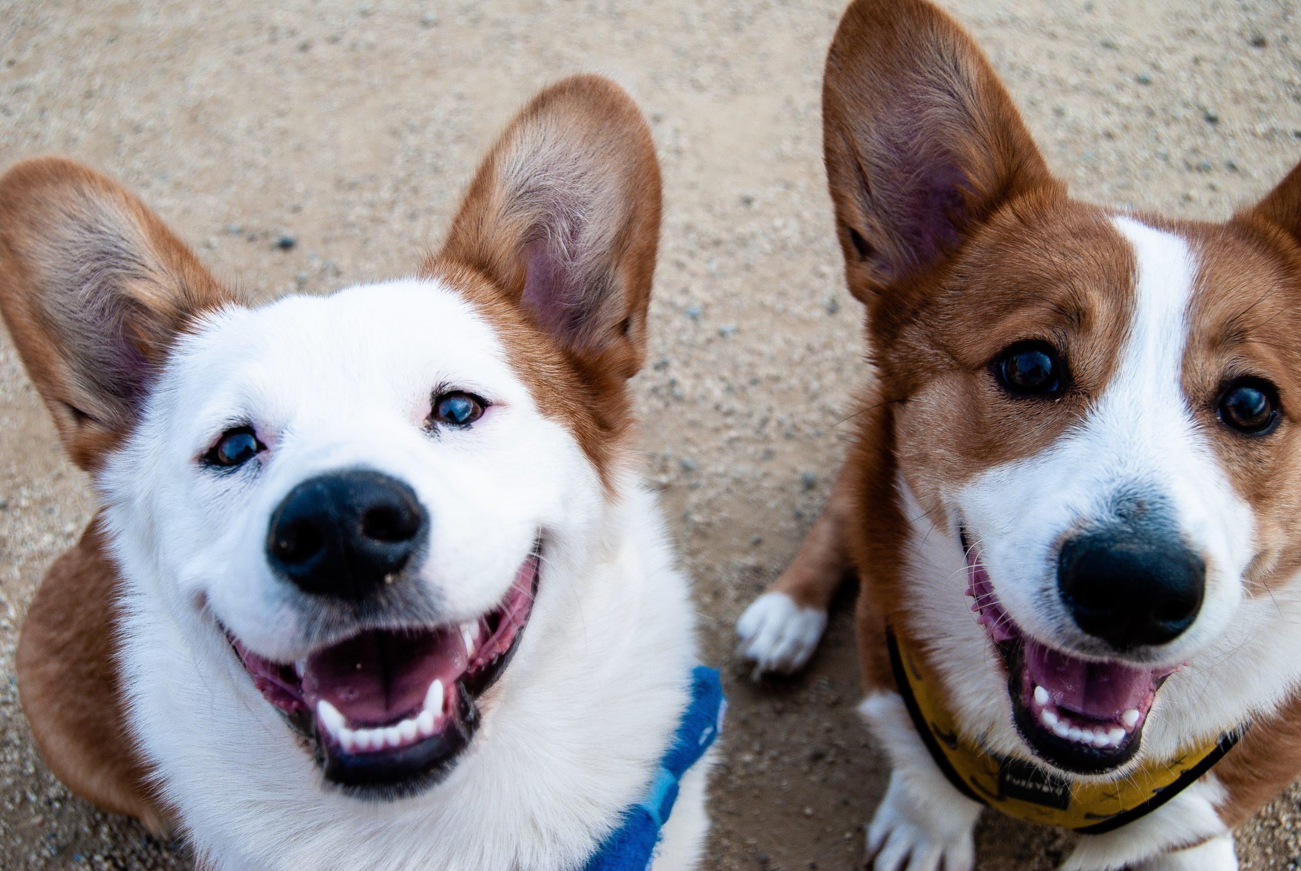 Al caldo con stile: H&M e la linea per noi e i nostri cagnolini