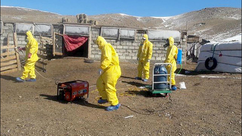 In Russia, casi di peste nera, quarantena imposta in Mongolia, due casi certi avevano mangiato carne di marmotta